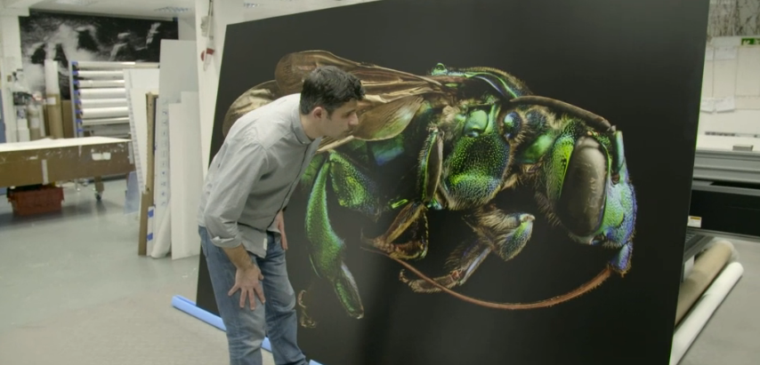Huge Photos of Insects